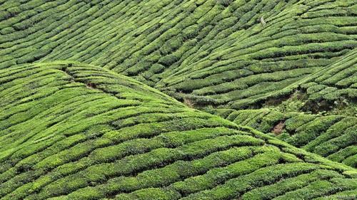 Китайские зеленые чаи