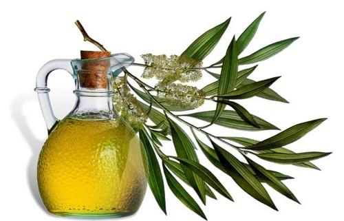 Эфирное масло зеленого чая: применение