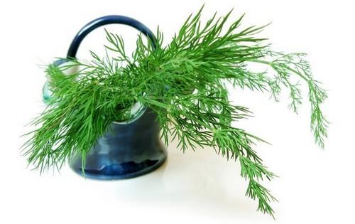 Укропный чай: как приготовить? Польза укропного чая