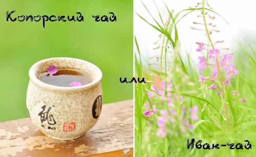 Копорский чай (Иван-чай) - полезные и лечебные свойства