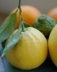 Так выглядяят плоды бергамота