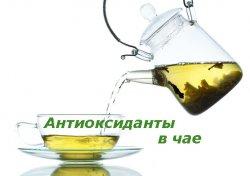 Антиоксиданты в чае