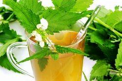 Польза чая из крапивы. Рецепты крапивного чая