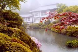 Японские зеленые чаи
