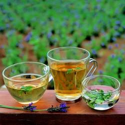 Шесть самых лучших зеленых чаев и их описание