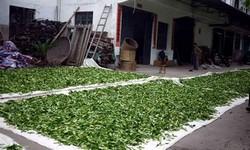 Производители зеленого чая — статистика по странам