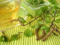 Чай из листьев березы: полезные свойства
