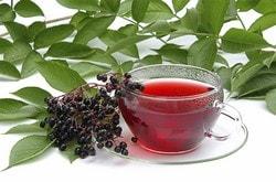 Чай из цветков бузины: польза и вред