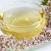 Чай из валерианы: польза и вред