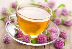 Чай из цветков клевера: польза или вред ?